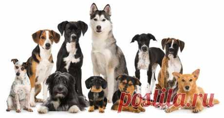 Породы собак: фото, названия пород, описания | Птичка.ру Породы собак с фотографиями и характеристиками пород, фото взрослых животных и щенков. Рекомендации по выбору собаки определённой породы для различных целей содержания.