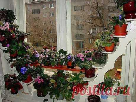 Удобные полочки для рассады и комнатных цветов . Совсем скоро мы начнем высаживать рассаду и как всегда столкнемся с проблемой нехватки места на окнах. Вот идея, которая поможет не только тем, кто любит комнатные цветы, но и садоводам.