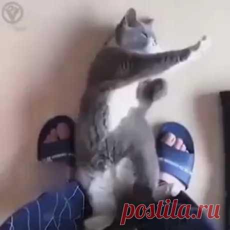High Chi Cat