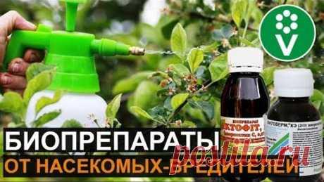 БЕЗОПАСНЫЙ способ защиты от насекомых-вредителей
