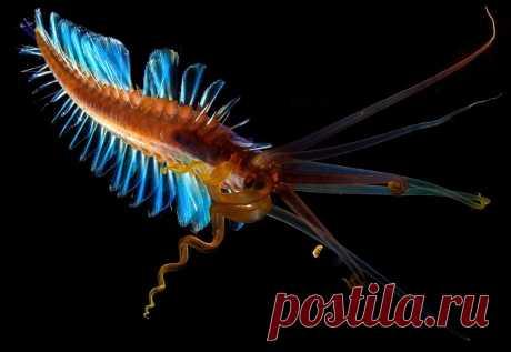 Кальмарочервь: Существо из бездны океана, про которое минимально информации | Рекомендательная система Пульс Mail.ru
