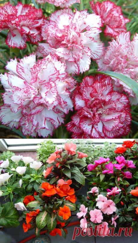Какие цветы можно сеять на рассаду в январе-феврале? - Садоводка