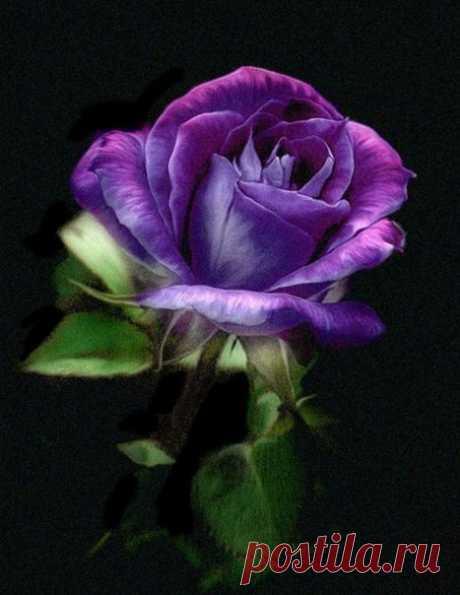 — На твоей планете, — сказал Маленький принц, — люди выращивают в одном саду пять тысяч роз... и не находят того, что ищут... — Не находят, — согласился я. — А ведь то, чего они ищут, можно найти в одной-единственной розе...