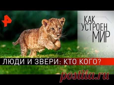 """Люди и звери: кто кого? """"Как устроен мир"""" с Тимофеем Баженовым (21.11.19)."""