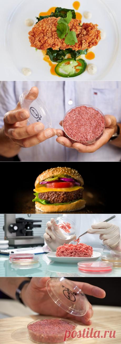 Мясо из лаборатории может появиться в продаже в 2021 году - Экологический дайджест FacePla.net