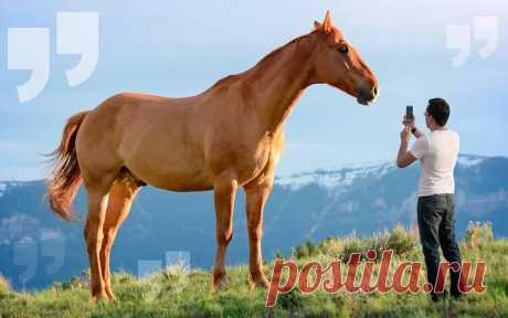 Самые большие лошади в мире: Крупные породы лошадей + ФОТО Вы знаете какая самая крупная порода лошадей? Сейчас мы вам расскажем. Только самые большие лошади у нас на сайте. Большой фото-обзор