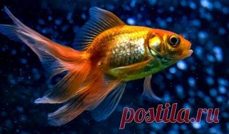 Ветеринары вырезали опухоль рыбке весом один грамм | Pentad