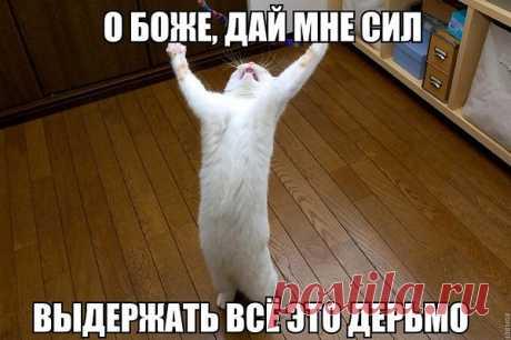 Галина Солонец