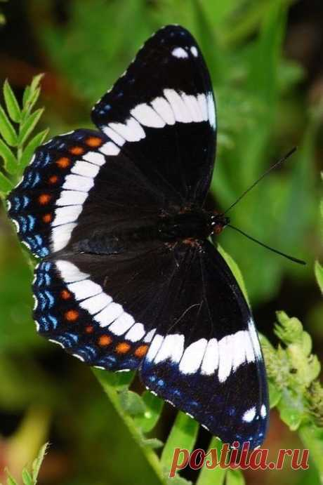 Fantástico Natureza, linda!!!