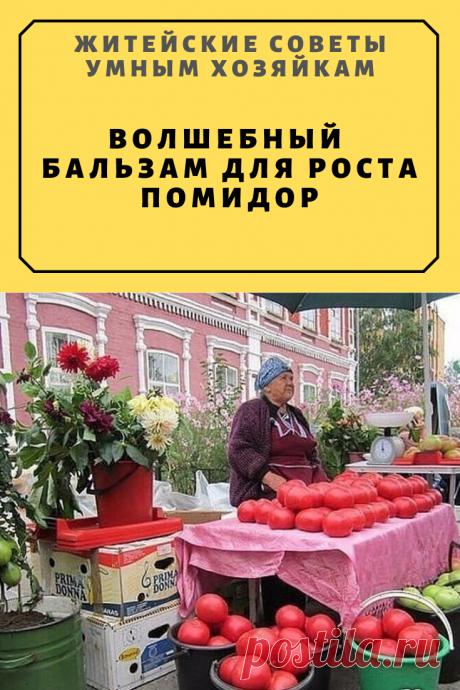 Волшебный бальзам для роста помидор | Житейские Советы