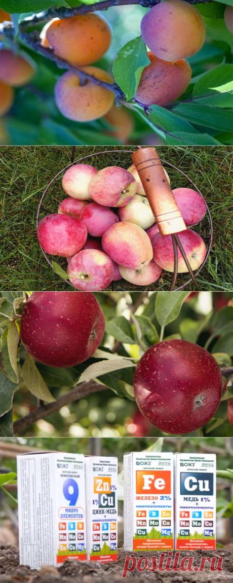 Подкормка плодовых деревьев летом: внекорневые подкормки