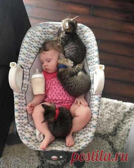 Смешные котики с которыми не соскучишься
