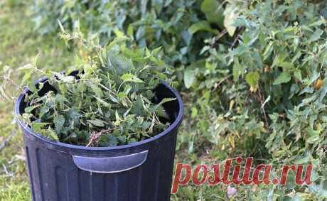 Чем я подкармливаю томаты после высадки рассады на грядку | Роскошная фазенда | Яндекс Дзен