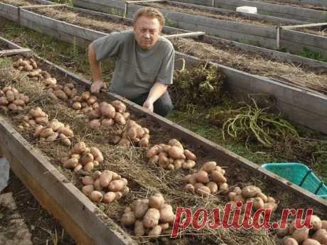 Уникальная технология посадки картофеля