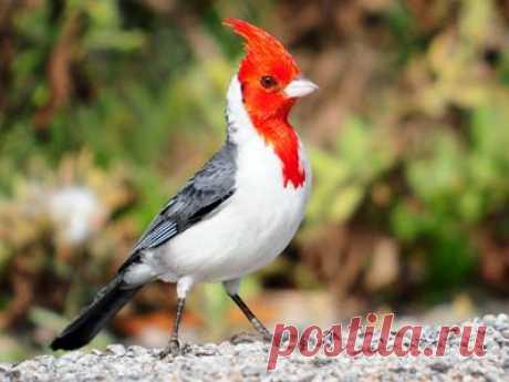 150 самых красивых птиц в мире.