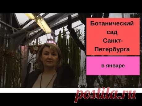 Ботанический сад Санкт-Петербурга в январе   Посетили на новогодних каникулах одну из экскурсий Ботанического сада. Делюсь впечатлениями из кусочка лета среди зимы.
