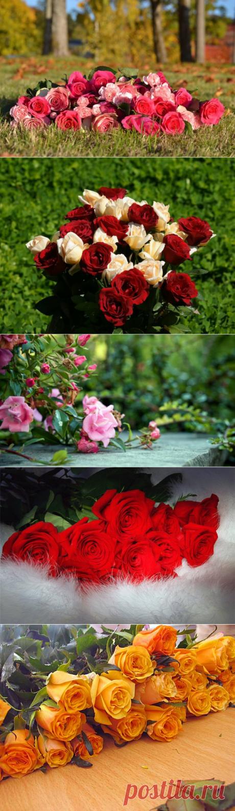 Натюрморт Розы брошены