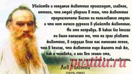 Михаил Емельянов (@ScherbDep)   Твиттер