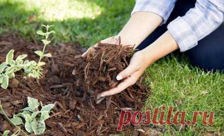 Чем можно мульчировать осенью – варианты на любой вкус | Почва и плодородие (Огород.ru)