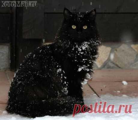 Не верьте плохим приметам. Черные коты приносят счастье!