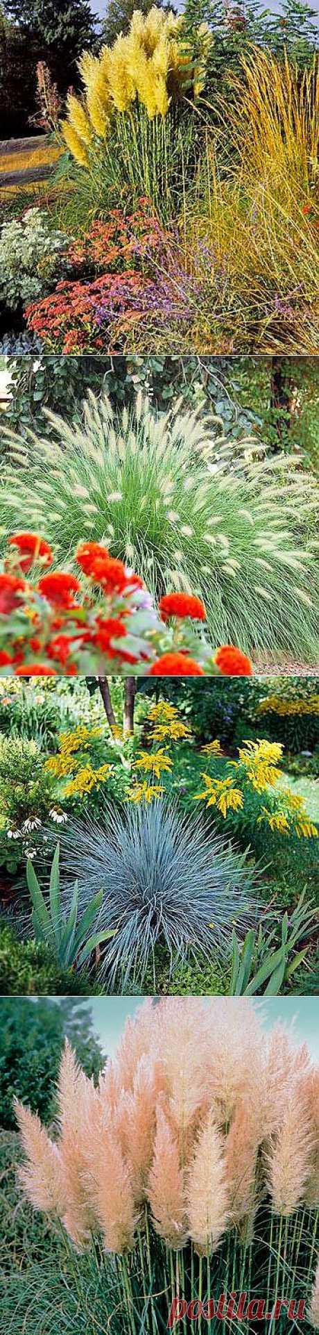 Фонтаны из декоративных злаков в вашем саду (распространенные виды декоративных трав с фото)