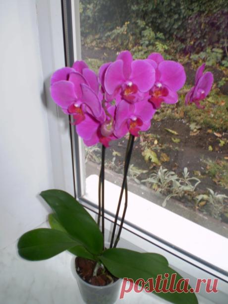 Как просто и правильно пересадить орхидею? | 6 соток