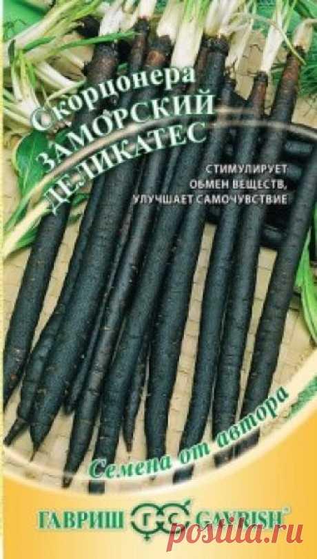 """Семена. Скорцонера """"Заморский деликатес"""" (вес: 0,5 г) Всхожесть: 80%. Двулетнее овощное и лекарственное растение семейства Астровых. В первый год образует розетку листьев и корнеплод. Корнеплод цилиндрический, длиной 30-40 см, диаметром 3-4 см, массой 100-150 г, с чёрной кожурой и белой нежной сладкой мякотью. Листья и корнеплоды скорцонера..."""