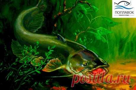 Ловим Сома весной - по дедовскому способу | Блоги о даче и огороде, рецептах, красоте и правильном питании, рыбалке, ремонте и интерьере