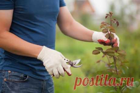 Обрезка роз после цветения – подробная инструкция для начинающих
