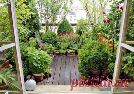 Сад на балконе – удивительная возможность даже городскому жителю наслаждаться невероятными красотами и пейзажами прямо у себя дома. Озеленение территории позволяет создавать живописный уголок, который будет радовать своей красотой и изысканностью. Главное – тщательно спланировать процесс, продумать каждую деталь, подобрать оптимальные растения. Давайте остановимся на основных моментах, связанных с формированием