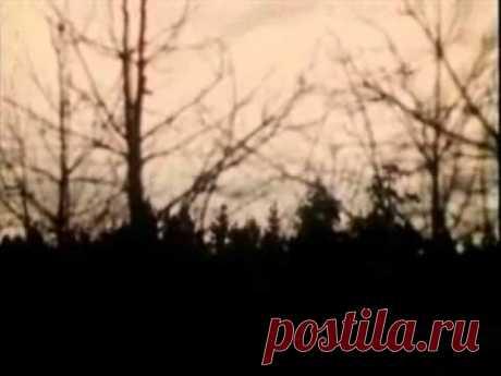 Стая птиц (Журавль в небе) Музыка - А.Колкер, слова - К.Рыжов.