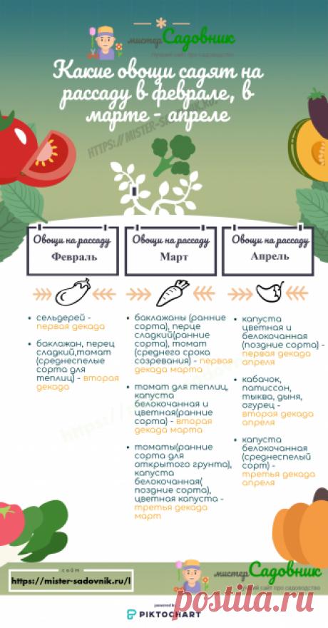 Сроки посева семян на рассаду и в грунт - таблица
