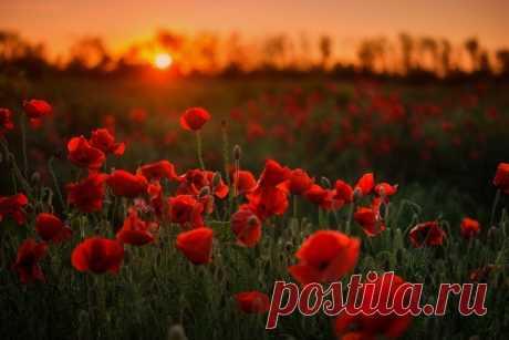 Вечерние краски Краснодарского края. Автор фото – Павел Сагайдак: nat-geo.ru/community/user/27069/
