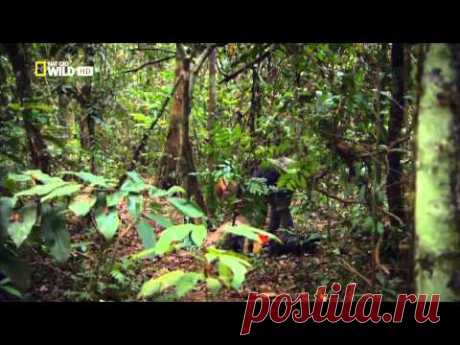 Beautiful Jungle - Movie of the National Geographic company