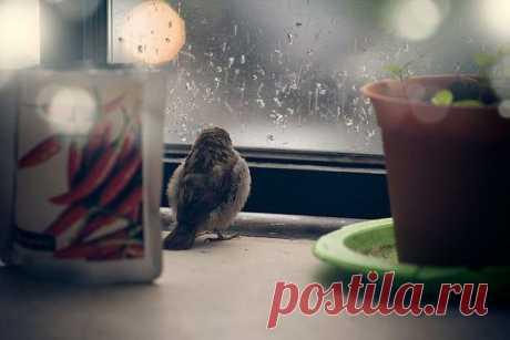 История о птенце воробья и человеческой доброте | Четвероногий юмор