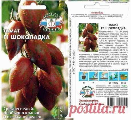 """Томат """"Шоколадка F1"""": фото и описание сорта гибридного очень вкусного помидора"""