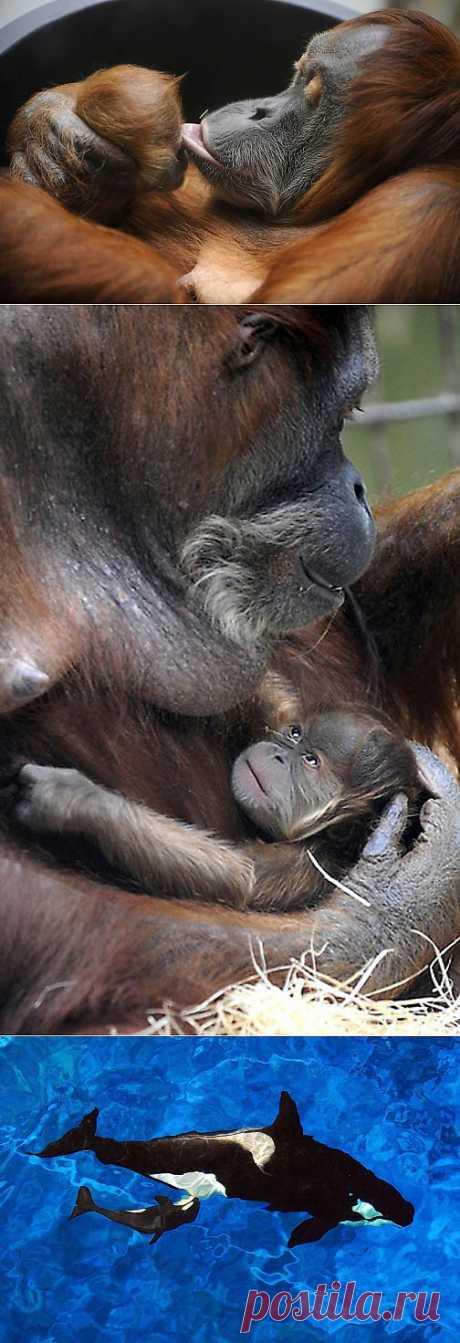 Детеныши животных (Часть 2) : НОВОСТИ В ФОТОГРАФИЯХ