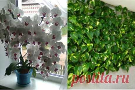 Бурное цветение и пышная листва обеспечены, если полить растения этой простой подкормкой! | Краше Всех