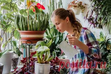У комнатных цветов опадают листья: 7 способов спасти растение - Наш уютный дом - медиаплатформа МирТесен