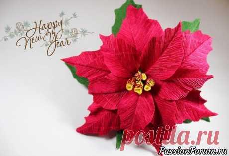 Пуансеттия из бумаги, быстро и очень просто! | Флористика, топиарии Многие слышали о таком растении как пуансеттия прекраснейшая (другое название молочай прекраснейший, рождественская звезда) это растение которое зацветает в самые холодные зимние месяцы. Цветы представляют себя небольшими пуговками-цветочками, обрамленными яркими прицветниками красных,...