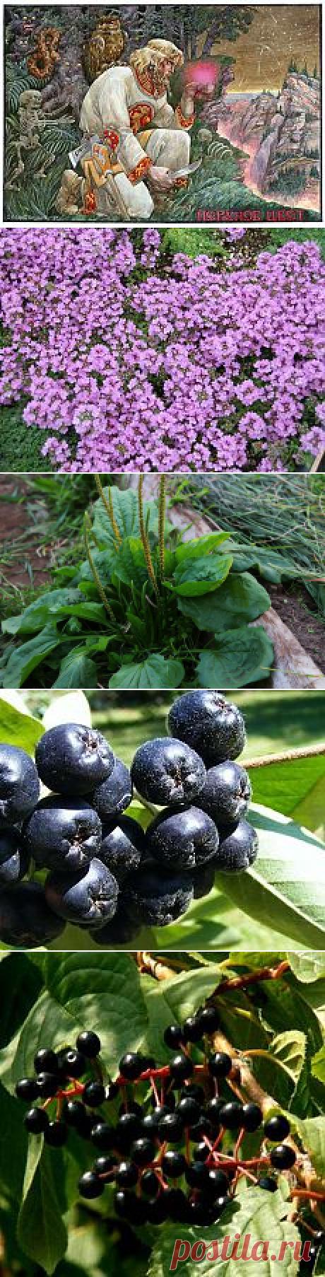 лекарственные травы | Фотографии и советы на Постиле