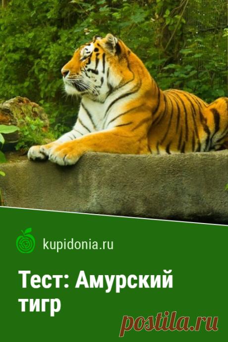 Тест: Амурский тигр. Интересный тест из серии о диких животных об амурском тигре. Проверьте свои знания!