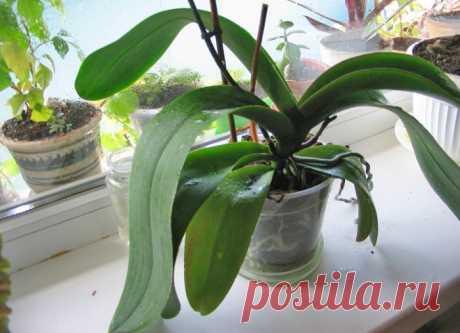 Домашнее удобрение для орхидей. Кому ни посоветую — все в восторге. - Образованная Сова