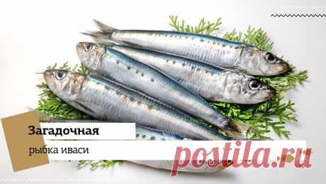 """Загадочная рыбка иваси   Недавно в России возобновился промысел морской рыбы иваси. Это произошло впервые за 25 лет. Ученые предполагают, что к 2030 году, ее вылов вновь прекратится. Что же это за рыбка такая?  По–научному иваси — дальневосточная сардина. А такое прозвище у нее появилось из–за того, что так ее называют японцы. В переводе с японского """"ма-иваси"""" означает «сардина». Рыбка обитает в морях Дальнего Востока.  В 40-х годах рыба без видимых причин просто исчезла и..."""