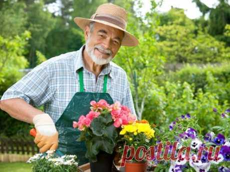 Самые полезные и хитрые советы для дачников садоводов