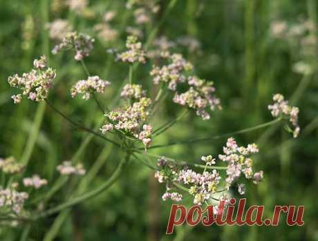 Садик пряных трав