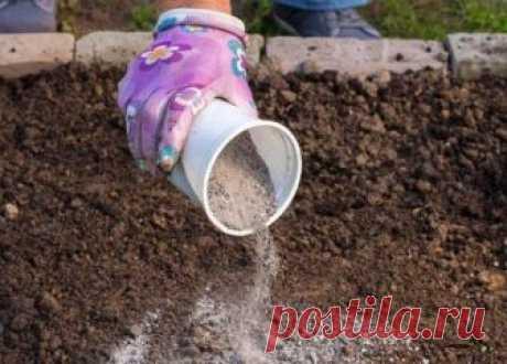 Как правильно подкармливать растения золой | Удобрения и стимуляторы (Огород.ru)