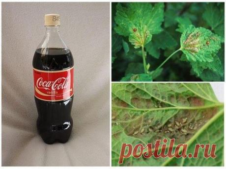 Кока-Кола сгодится и в огороде: 7 способов применения