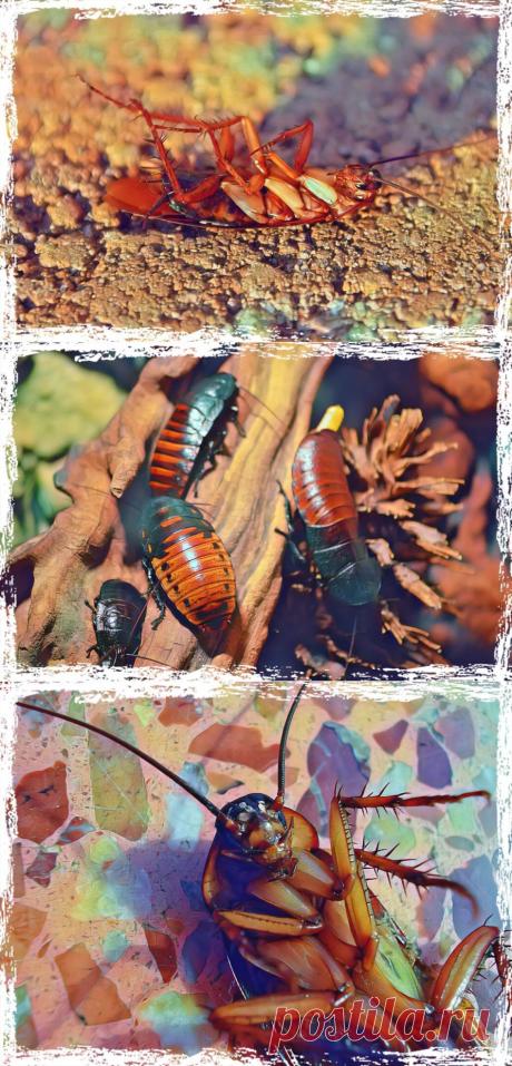 Как вывести тараканов из дома навсегда?
