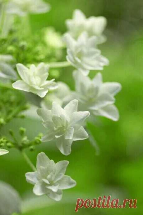 Привет! Это я - твоя новая Весна!!! Пришла к тебе с радостью и добрыми переменами!!! Теперь у тебя всё будет по - новому!!!